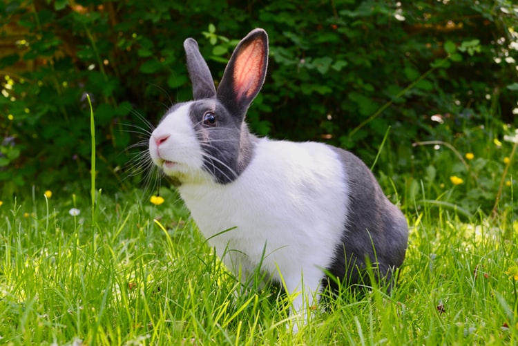Caring For Rabbits: A Beginner's Guide