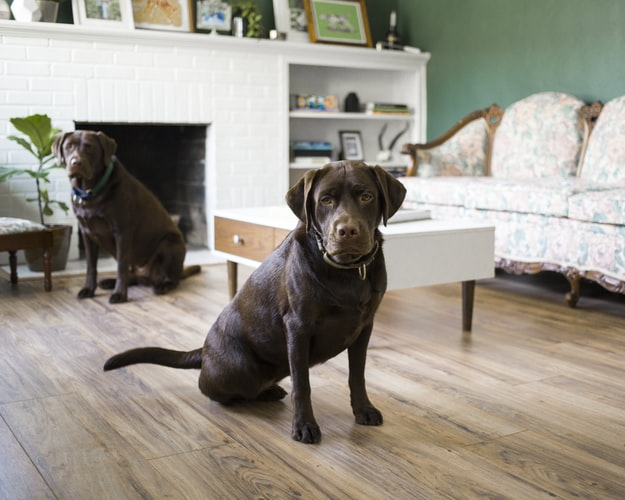 Weight Loss Tips For Pets And Other Animals