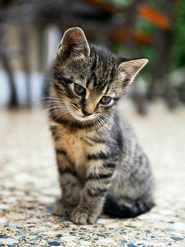 Cat Vaccinations: Facts And Figures
