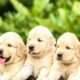 Best Pets For Your Children To Have
