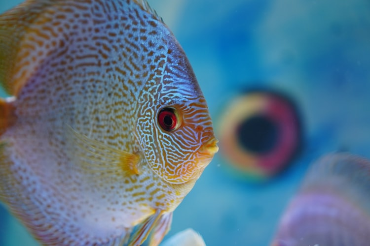 Best Pet Fishes Options For Beginners