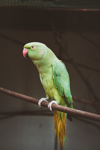 How To Take Care Of Your Pet Parrot