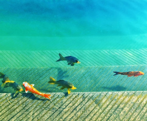 Best Pet Fishes Breeds To Try Out